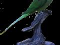 papegoeje