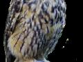 ugleskovhorn
